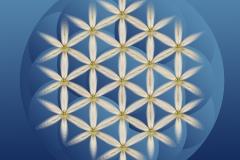 cveteто-na-jivota-с-кръгове-5cm
