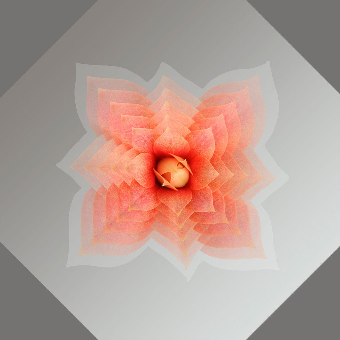 UNTITLED 4 series UNIVERSE, 2014 Pigment print, 50x50 сm